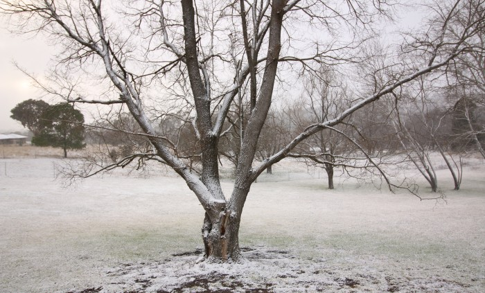 Snow covers a tree outside of a room at Moore Park Inn, Armidale accommodation