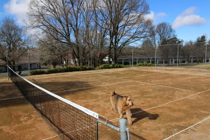 A happy dog explores the tennis courts outside of the best place to stay in Armidale, Moore Park Inn