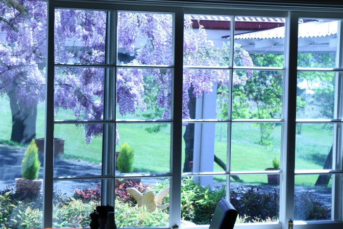 Purple flowers can be seen from inside a room in Armidale at Moore Park Inn