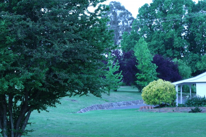 Greenery that can be seen from a room available in Armidale