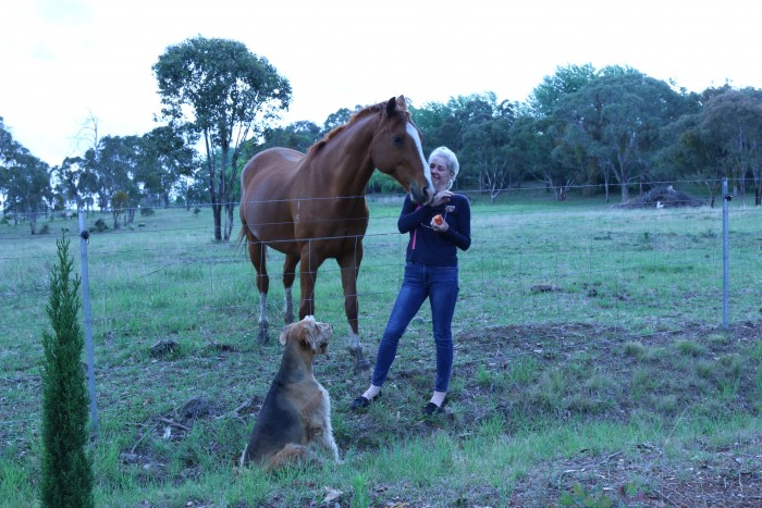 A young woman feeds a horse as part of her stay at accommodation in Armidale with her dog.