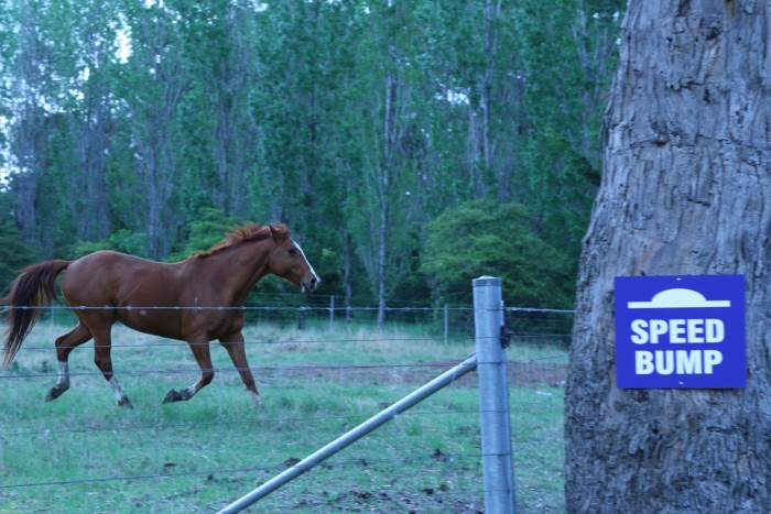 A brown horse gallops past accommodation in Armidale happily.