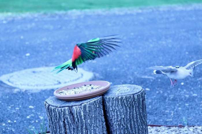 A parrot and a dove landing on a feeder outside of a room available in Armidale at Moore Park Inn.