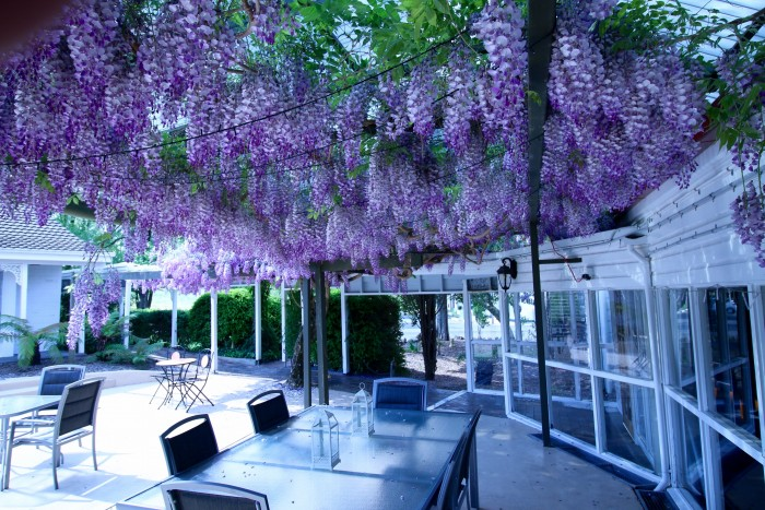 The courtyard just outside of the rooms available at Armidale's Moore Park Inn with purple flowers draping down over it.