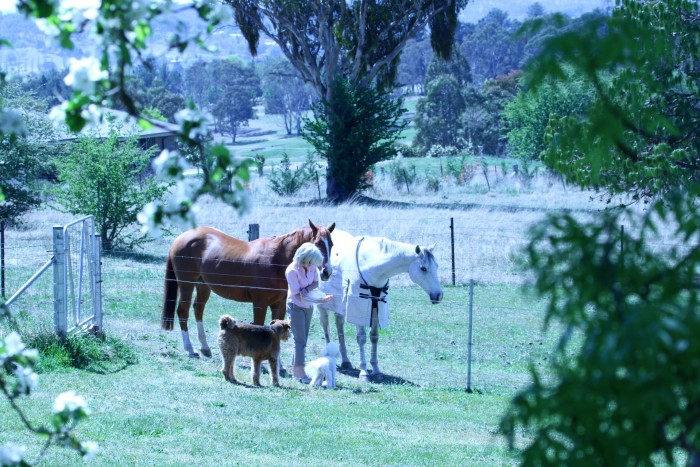 A women tends to a white and brown horse with dogs close to the accommodation at Moore Park Inn Armidale